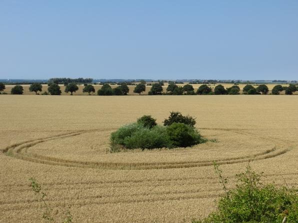 Kornkreise ... ihr wisst schon ... wer kann die schon erklären? (foto: zoom)