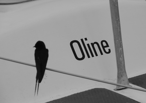 "Like a bird on a wire - always "" Oline"" - nur ein Yacht-Name ;-) (foto-zoom)"