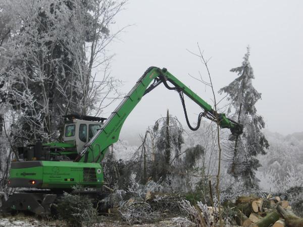Am Hagenblech oberhalb des Bahnhofs wurden heute vereiste Bäume gefällt. (foto: zoom)