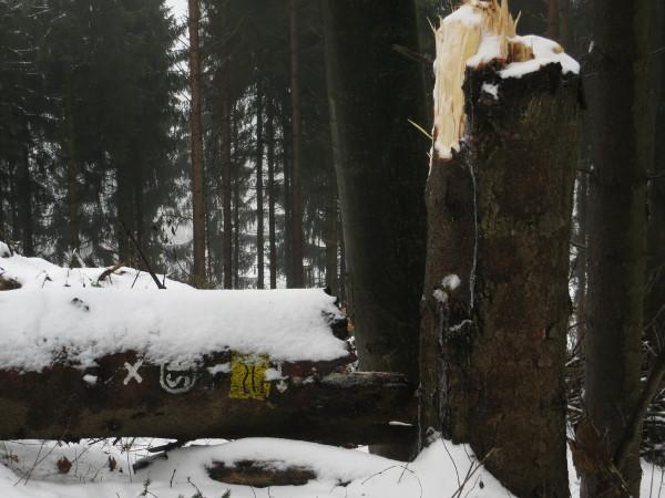 Laufen am letzten Tag des Jahres mit Schnee, +1° C und Hindernissen auf der Strecke. (foto: zoom)