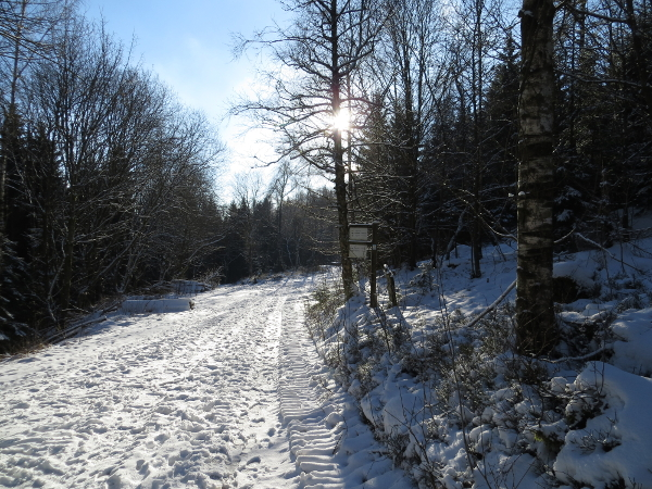 Rund um die Ennert: der letzte schöne Tag zum Joggen ist wahrscheinlich heute vorbei. (foto: zoom)