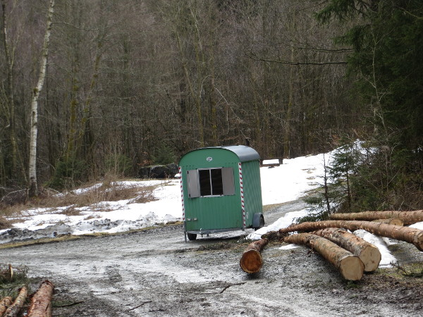 Beim Laufen rund um Siedlinghausen. Immer was los im Wald. Hier: Fenster. (foto: zoom)