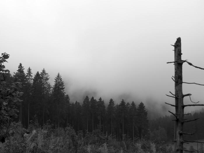 Wirtschaftswald im Hochsauerland. (foto: zoom)