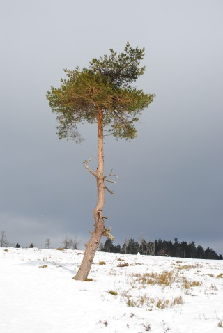 Abschied vom Winter: Sonntag auf dem Kahlen Asten. (foto: johanna huebner)