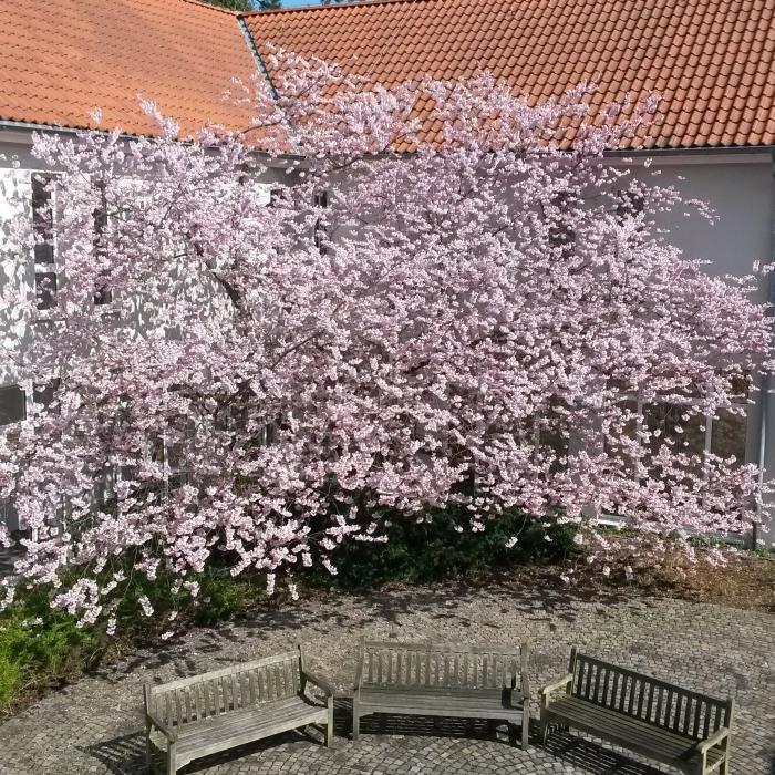 """Bei """"bestem Seminar-Wetter"""" saßen wir drinnen, während draußen die Kirsche blühte. (fotos: zoom)"""